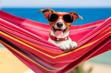 16.08.31 Amigos Peludos – Qué pueden hacer nuestras mascotas