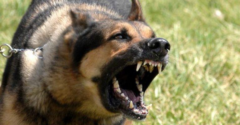 16.09.14 Amigos Peludos – Perros potencialmente peligrosos