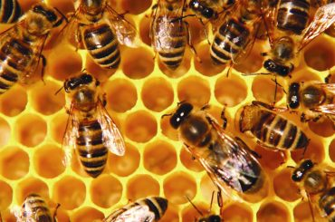 17.06.07 Tierra – Proteger a las abejas